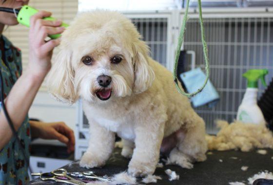 Negocio peluquería perros y gatos